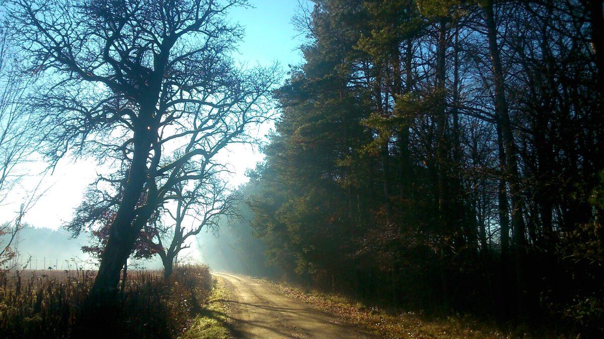 út az erdőbe